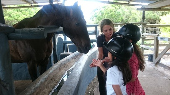 learning experience with horses