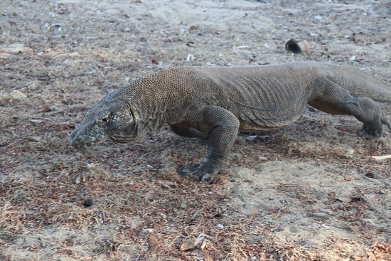 Komodo Memorable Tour
