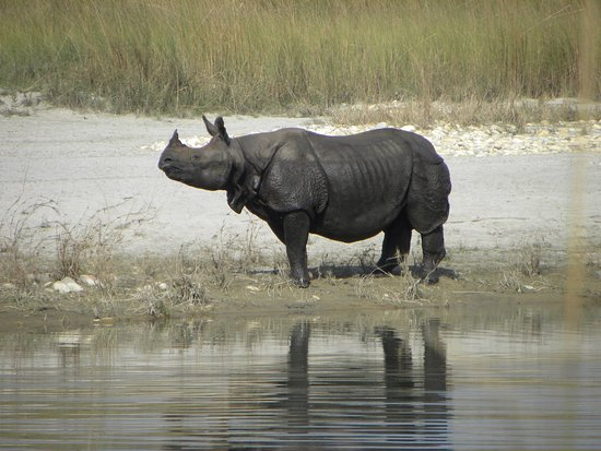 Bardia National Park Foto