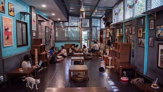 Image result for Cat Studio Cafe in Mumbai