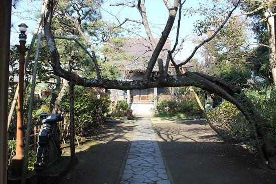 Kyoon-ji Temple : 参道を遮る桜の木
