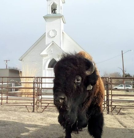 Oberlin, KS: 1888 St Marks Church and our guest.