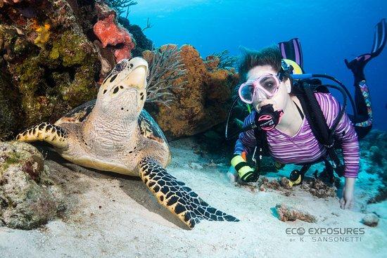 Eco Divers