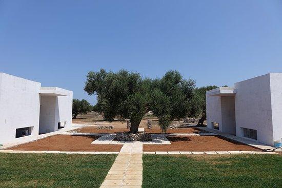 Merine Apulia Photo