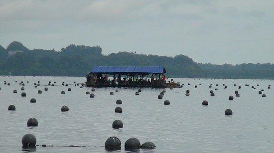 Misool, อินโดนีเซีย: Coltivazione di perle