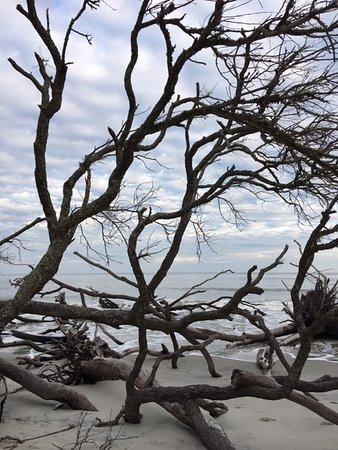 Hunting Island State Park Photo