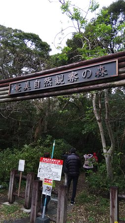 Amami Nature Observation Forest