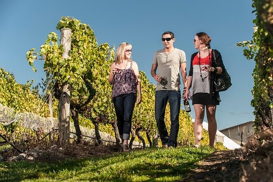Martinborough Weinprobe Tour von ...