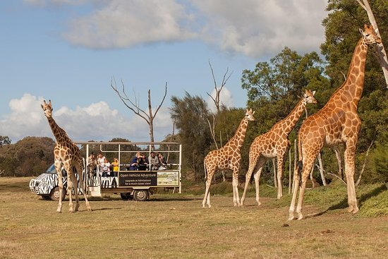 ウエリビーオープンレンジ動物園でのオフロードサファリ