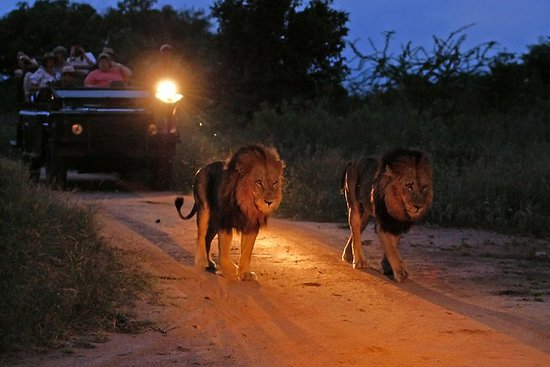 Night Game Drive and Bush Dinner from...