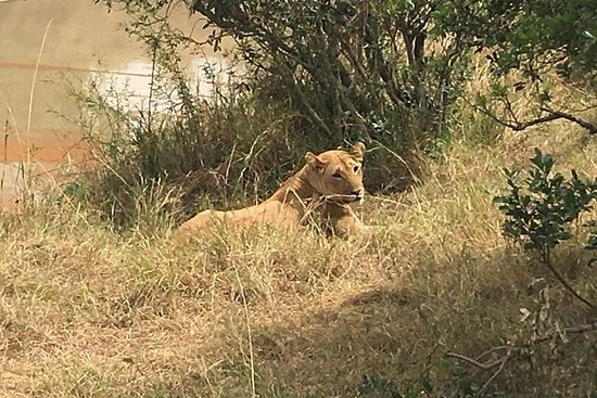 Nakuru Nationalpark Tagestour von...