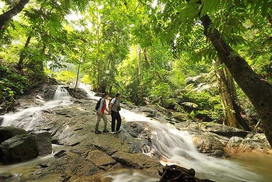 クアラルンプール:熱帯雨林の日
