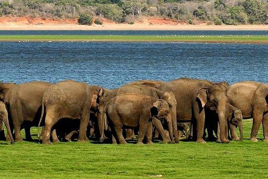 Minneriya Elephant Safari con Sigiriya...