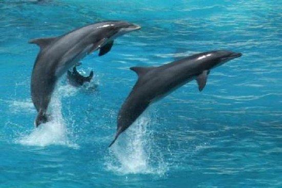 海豚观赏(2小时):马斯喀特之旅
