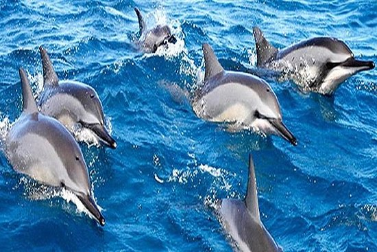 Dolphin Watching og Snorkeling Tour...