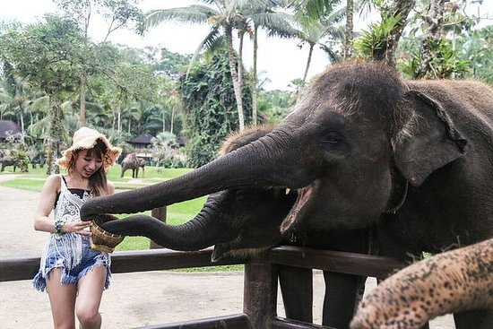 Visita nocturna al elefante más cena...