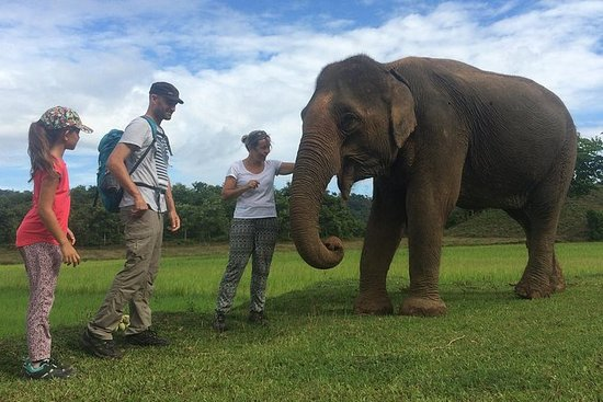 Elephant Care Activities in Lak lake...