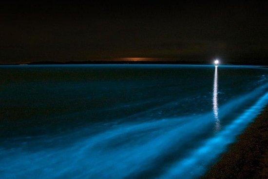 Bioluminescence Kayak Tour