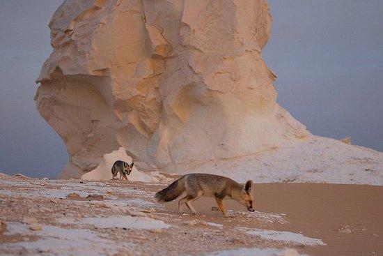 Excursão ao Deserto de Safári no...
