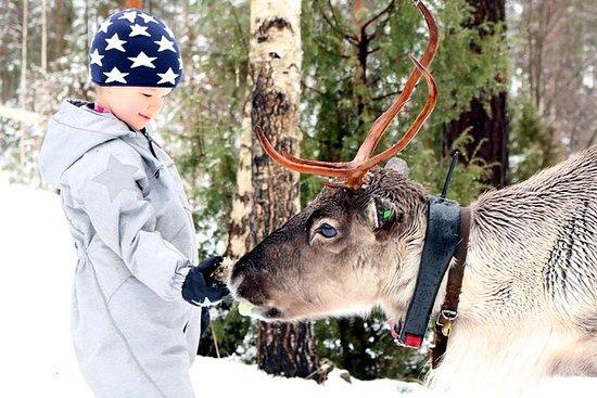 Experiência de renas
