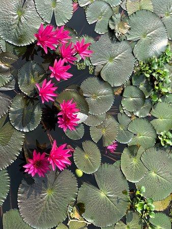 Go Kerala Go Coconut Lagoon