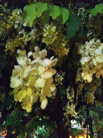 Antonia Cantina Comedor: Interior y árboles cercanos