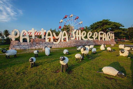 芭提雅小绵羊农庄
