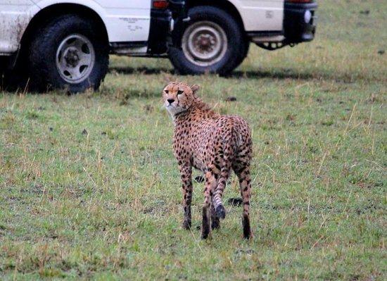 Réserve nationale du Masai Mara, Kenya : An unforgettable experience,what a game drive