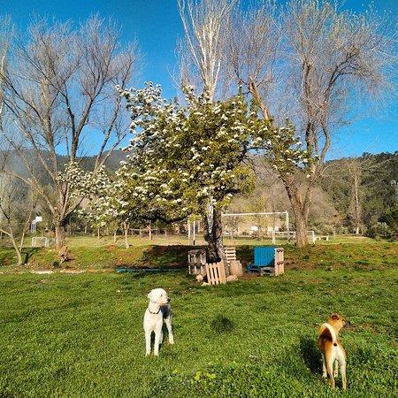 El Contadero Aventuras: Amigos de los perros