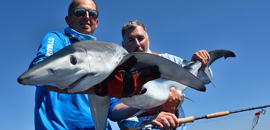 Port-Louis, ฝรั่งเศส: Sensations fortes avec ce gros requin peau bleue à la mouche Huge Blue shark on the fly