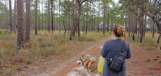 Sopchoppy, FL: Walking towards White Deer (in left side background)