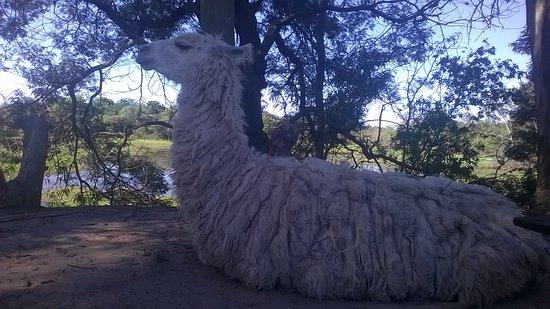 Villaguay, Argentina: Llama tranqui.