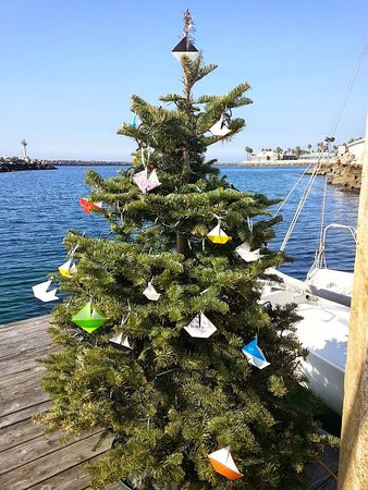 What a great way to celebrate the holidays. GIVE THE GIFT OF SAILING! All of our sailing options can be given in the form of gift certificates. Give us a call!