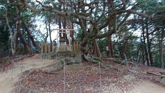 Kumatori-cho, Япония: 奥山雨山自然公園