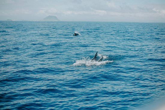 Swim With Wild Dolphins in Tauranga: Pilot whales approaching our boat