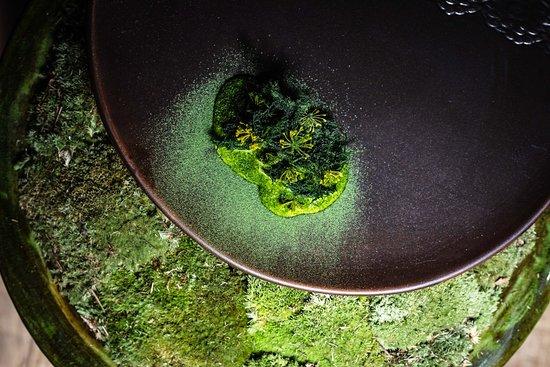 Babel Budapest: Seabass | seaweed, dill, lardon
