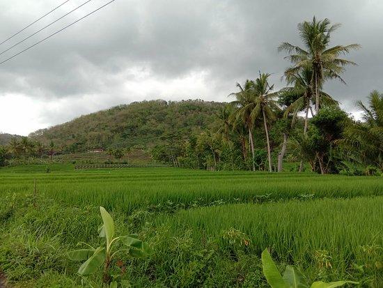 Ristoranti: Yogyakarta