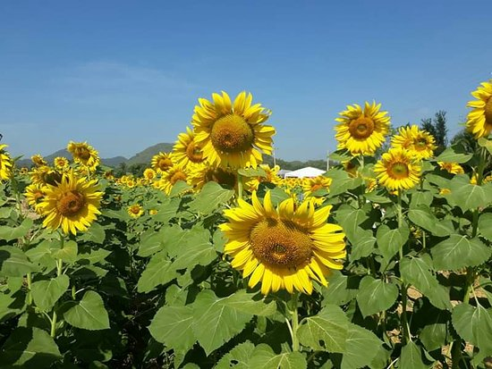 Khao Yai National Park, Thaïlande : Khao Yai is very popular. The weather is very good, there are many places to visit.