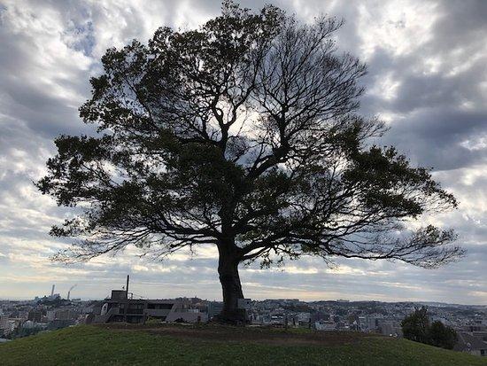 Shimizugaoka Park
