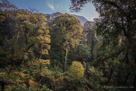 Lai Chau, Vietnam: Pu Ta Leng wild forest