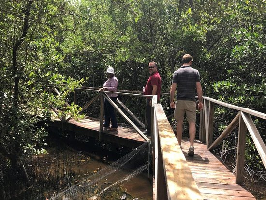 Boardwalk through the mangroves