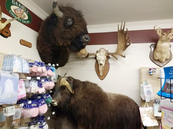 Grabill, IN: Buffalo and musk ox in the corner