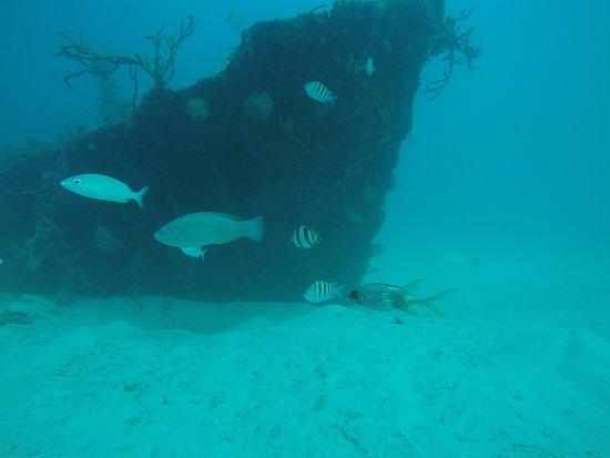 Roger's Scuba Shack: Once a ship