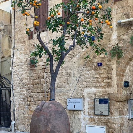 Suspended Orange Tree Jaffa 2019 All You Need To Know Before You