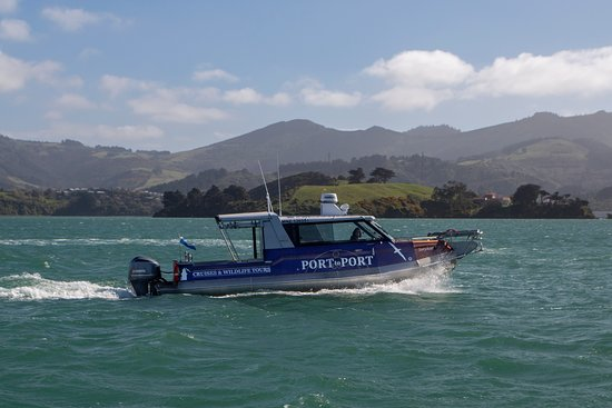 Port To Port Cruises And Wildlife Tours: Sootychaser in Portobello