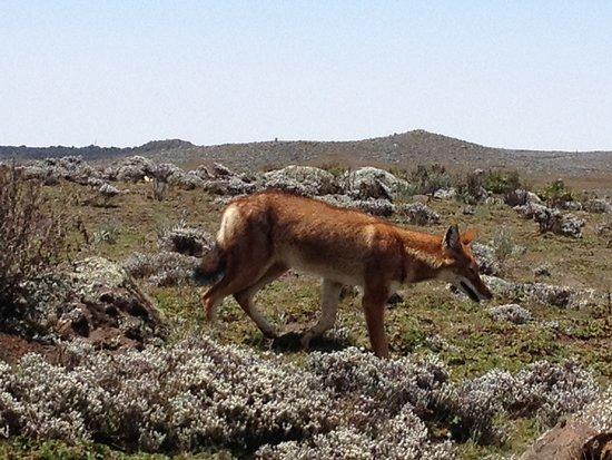 Bale Mountains National Park Foto