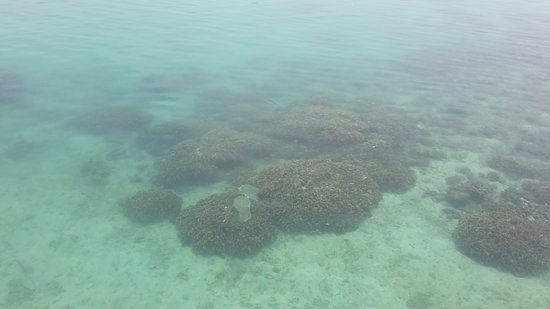 Tidung Island: The water wasn't that clear.