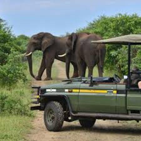 Victoria Falls, Zimbabwe: Game Drive