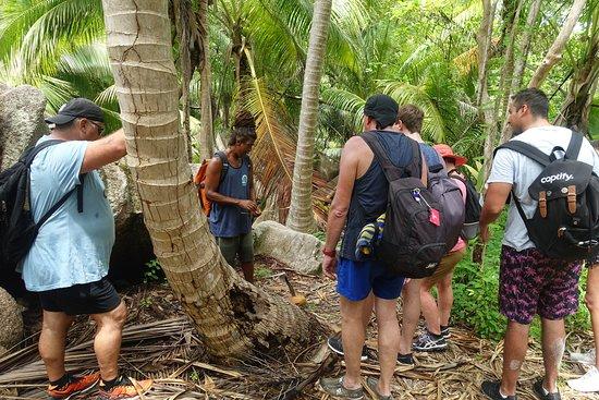 Excursión a Anse Marron: im Regenwald