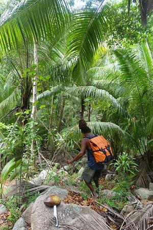 Excursión a Anse Marron: Gerard sucht eine Kokosnuss